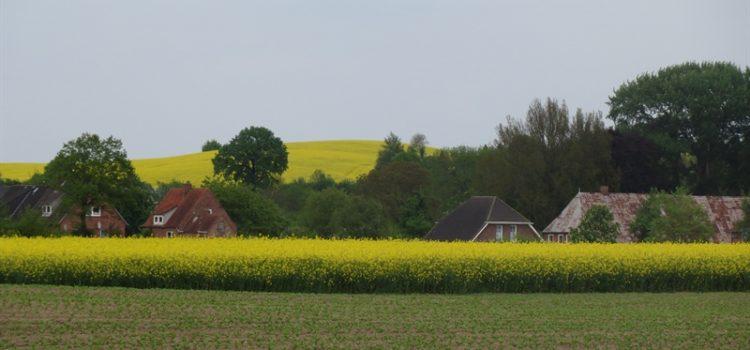 Raps in Schleswig Holstein